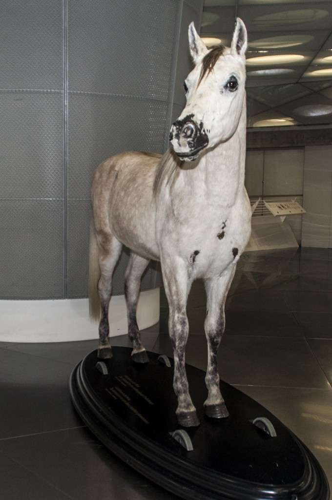 Museo Mercedes-Benz Stoccarda: il cavallo